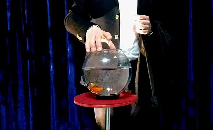 Appearing Fish in Bowl