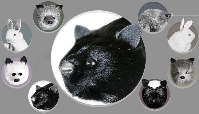 Black Fox Spring Animal - magic