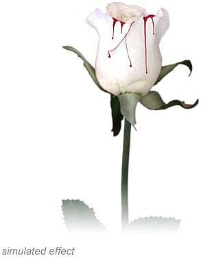 Bleeding Rose - magic