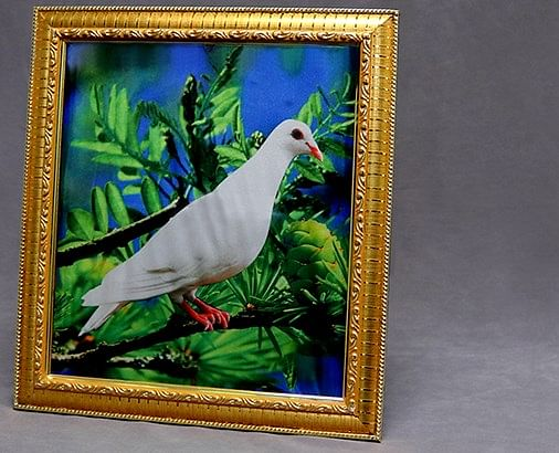 Dove Frame (Photo) - magic