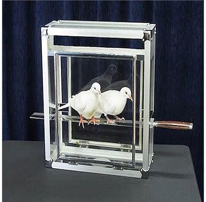 Doves on Sword in Glass Cube