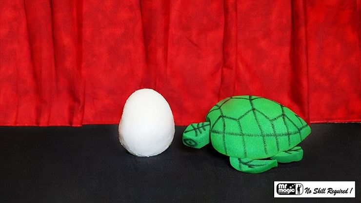Egg to Tortoise