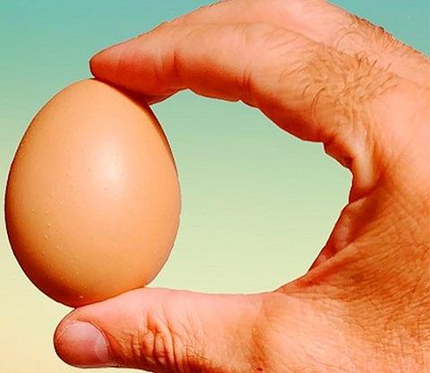 Fake Egg (Brown)