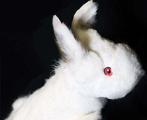 Rabbit Spring Animal