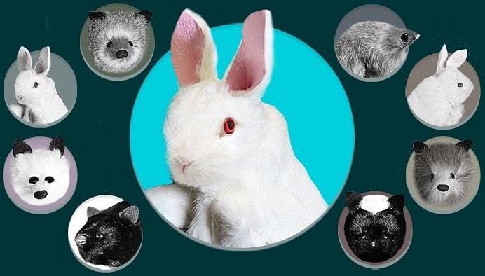 Rabbit Spring Animal - magic