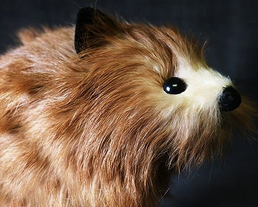 Red Fox Spring Animal