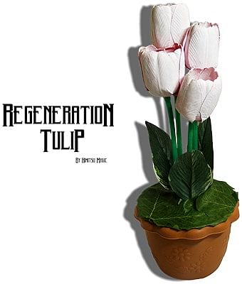 Regeneration Tulip - magic