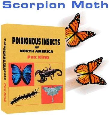 Scorpion Moth - magic