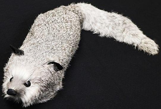 Silver Fox Spring Animal