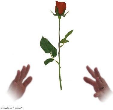 Simplex Floating Rose - David R. Evangelista - magic