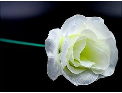 White Flash Flower
