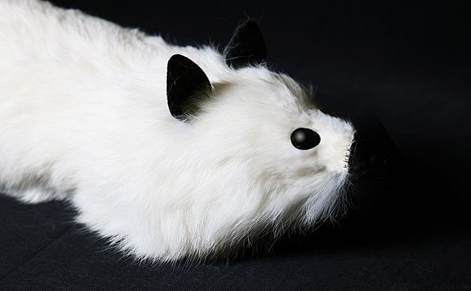 White Fox Spring Animal