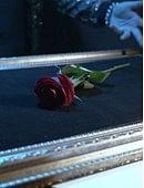 Visual Matrix (The Rose Act) Trick